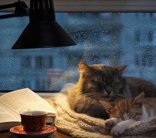 rainy days want to sleep
