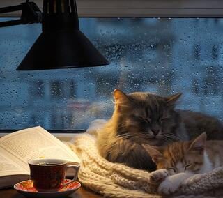 rainy days want to sleep
