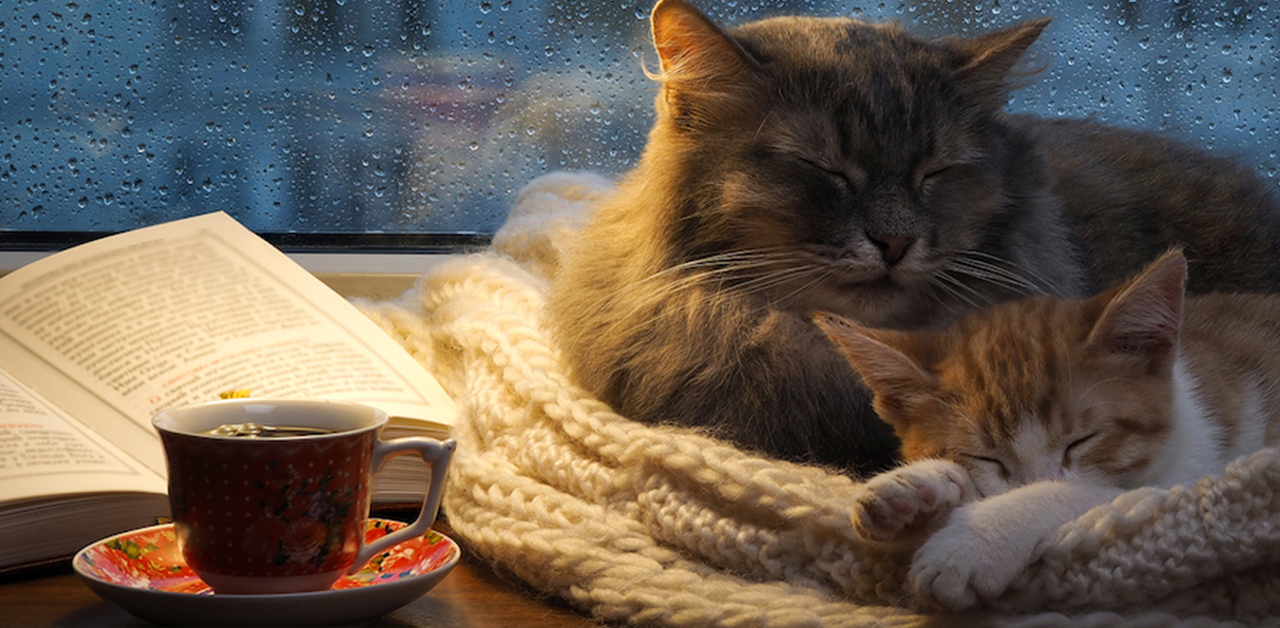 What Is It About Rainy Days That Makes Us Want To Sleep?