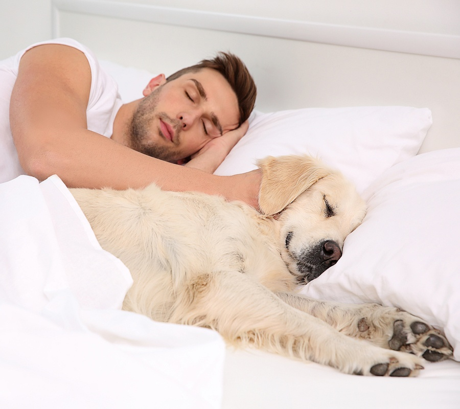 7 Reasons Why Letting Your Pet Share Your Bed Actually Helps You Sleep