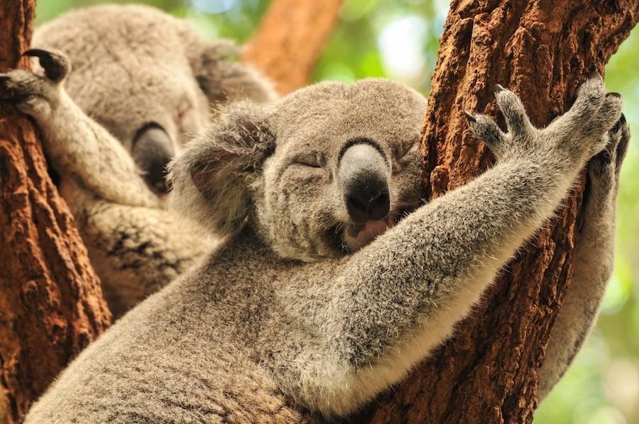 Interesting Animal Sleep Habits
